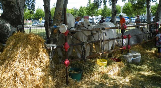 Torna il 19, 20 e 21 giugno la Fiera agricola del Santerno