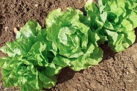Furti nelle aziende agricole: campagna sotto assedio