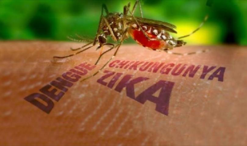 Virus Zika, la soluzione può arrivare dai ricercatori bolognesi