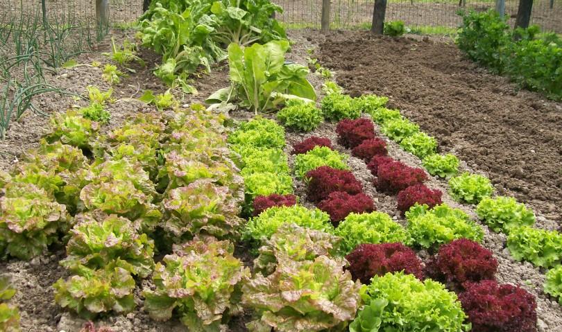 Vuoi coltivare un orto? Chiedilo al Comune!