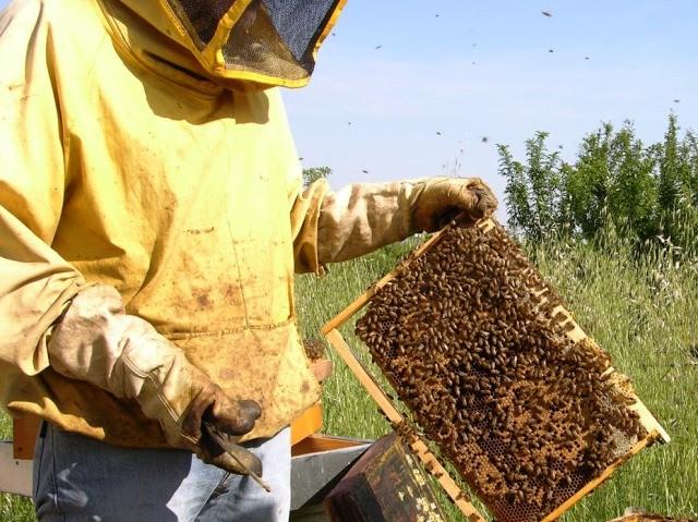 Miele, crollo della produzione. Colpa delle piogge