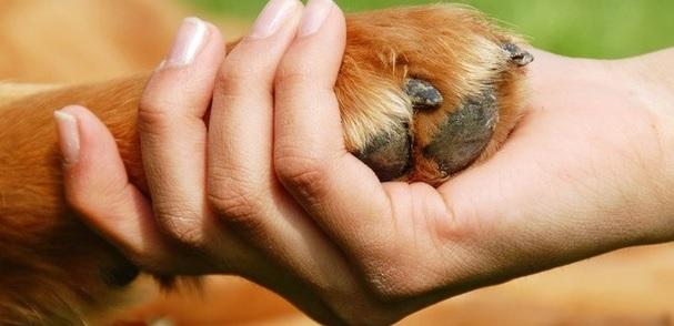 Tutti i segreti della Pet therapy: iniziativa alla CRA Venturini