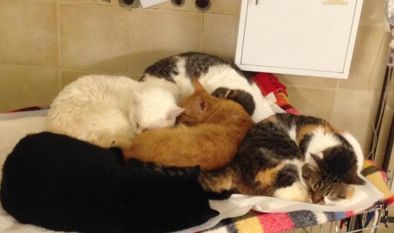 Situazione precaria al gattile. Gatti al freddo e termoconvettore rotto