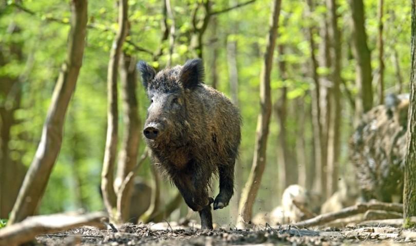 Oltre due milioni di danni da fauna selvatica. Cosa si fa per prevenire?
