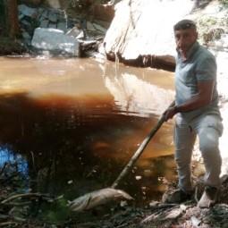 Liquami nel Rio di Gaggio? Trote morte, allertata la Provinciale