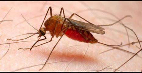 Ausl Imola, caso di malaria in una bimba di 5 anni