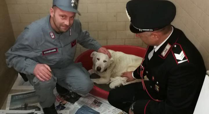 Maltrattamento di animali: quarantaquattrenne denunciata dai Carabinieri