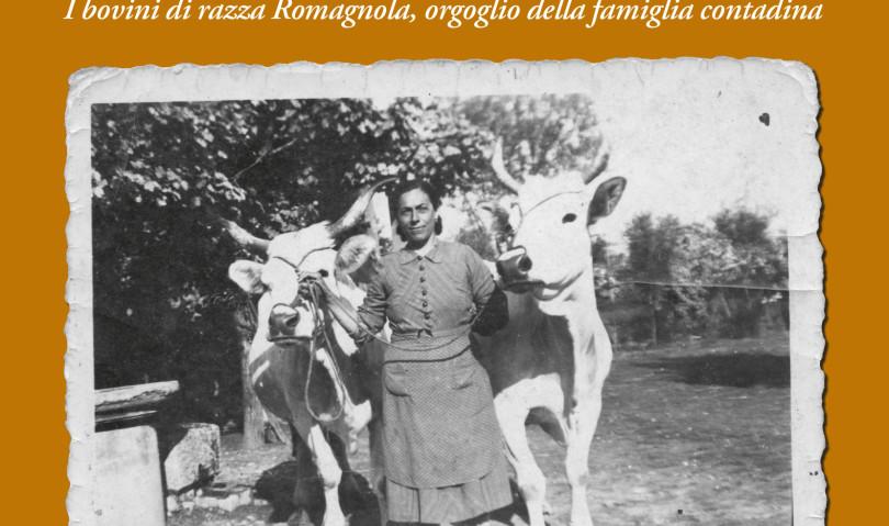 Il bovino di razza romagnola protagonista al museo San Domenico