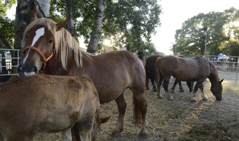 Venerdì al via la Fiera agricola del Santerno