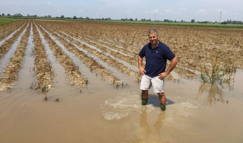 """Piogge """"tropicali"""", danni alle colture nella bassa imolese"""